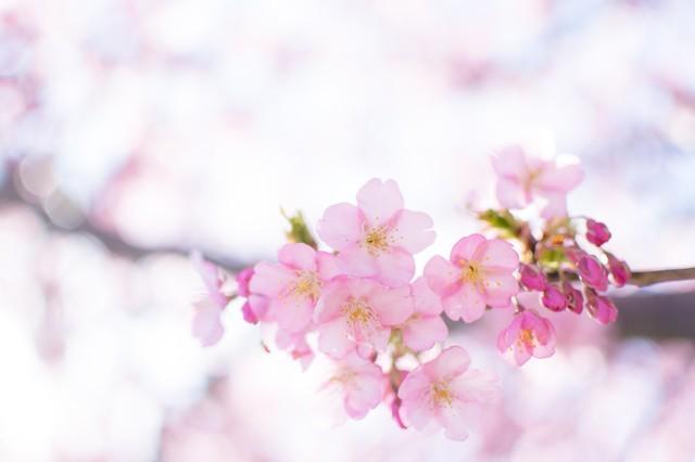 2018/4/8、21 土地探し相談会